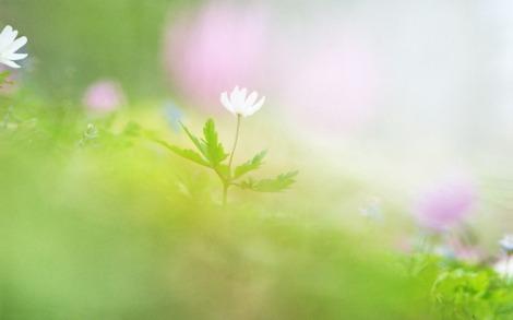 soft_focus_sweet_romantic_flowers_jk038_350a.jpg